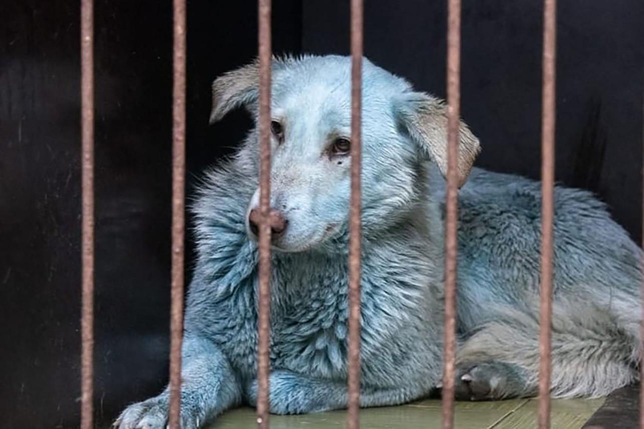 cane blu russia