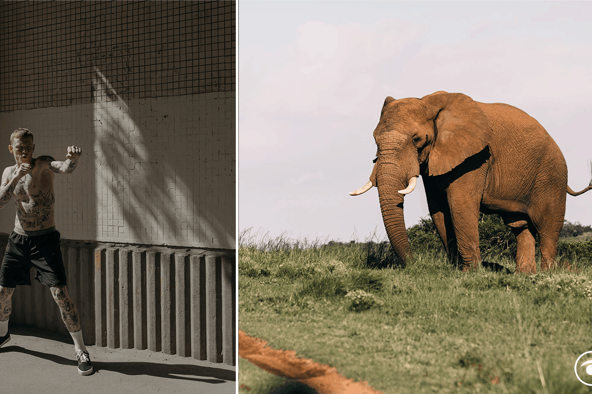 uomo batte elefante americani sondaggio