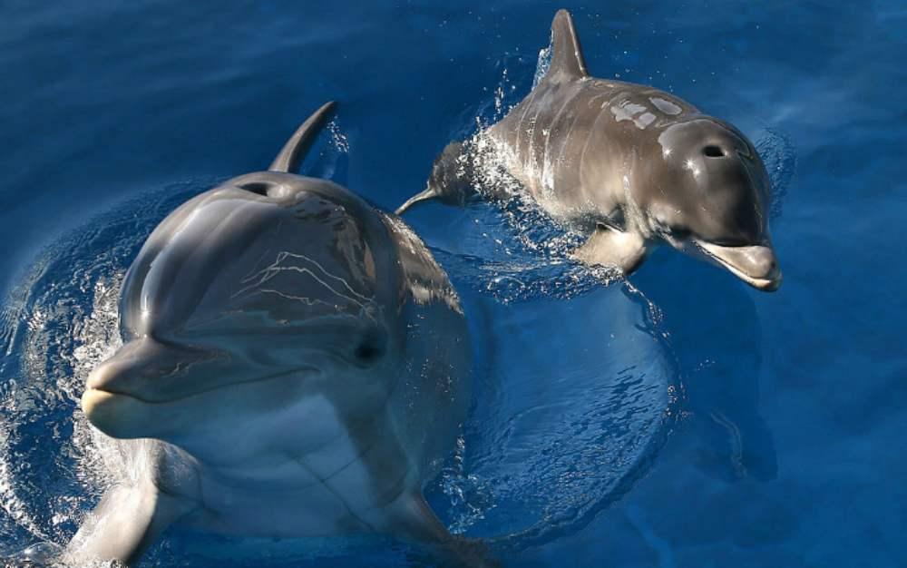 delfini cattivi